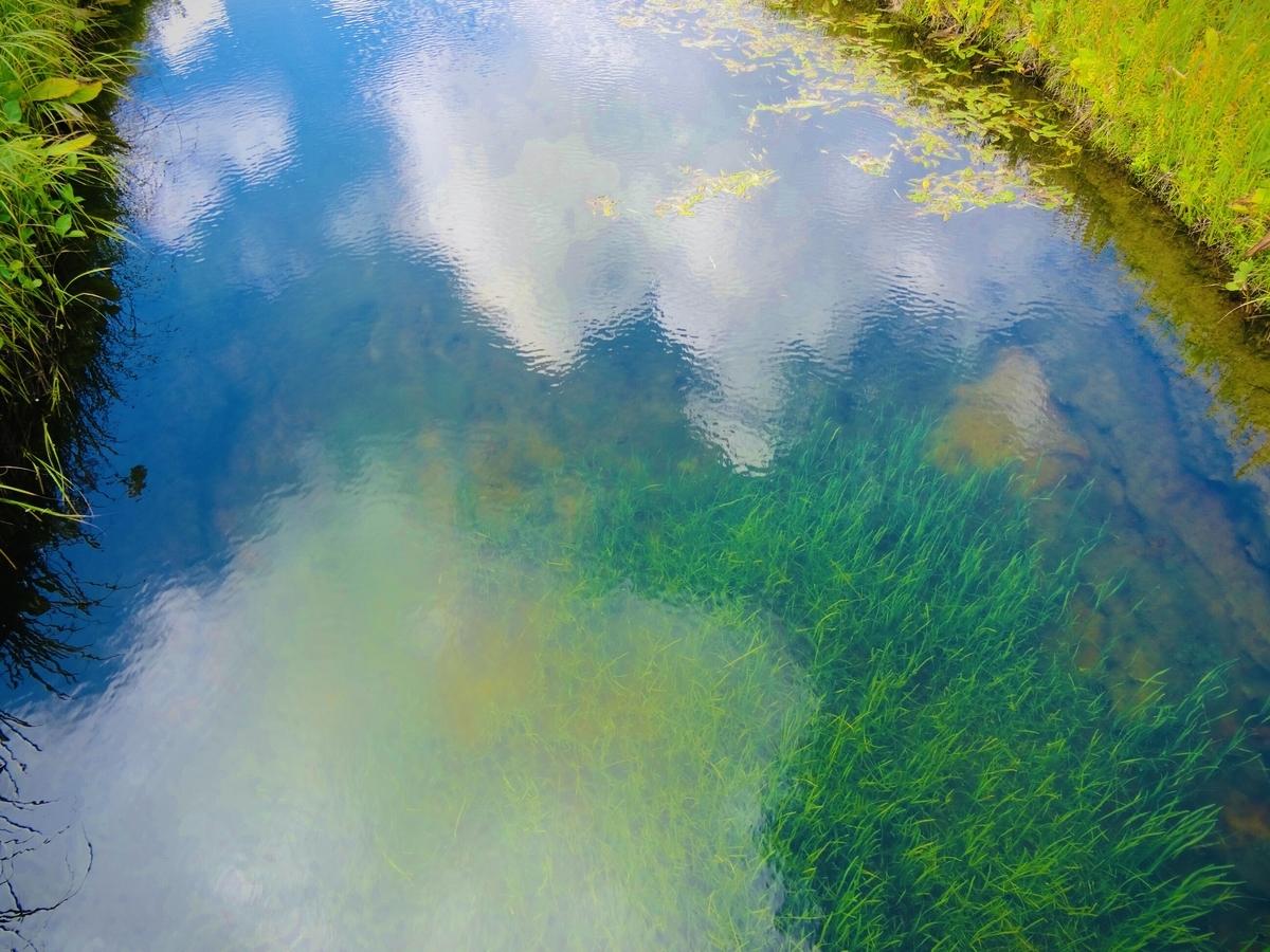 f:id:Wetland:20200416021118j:plain