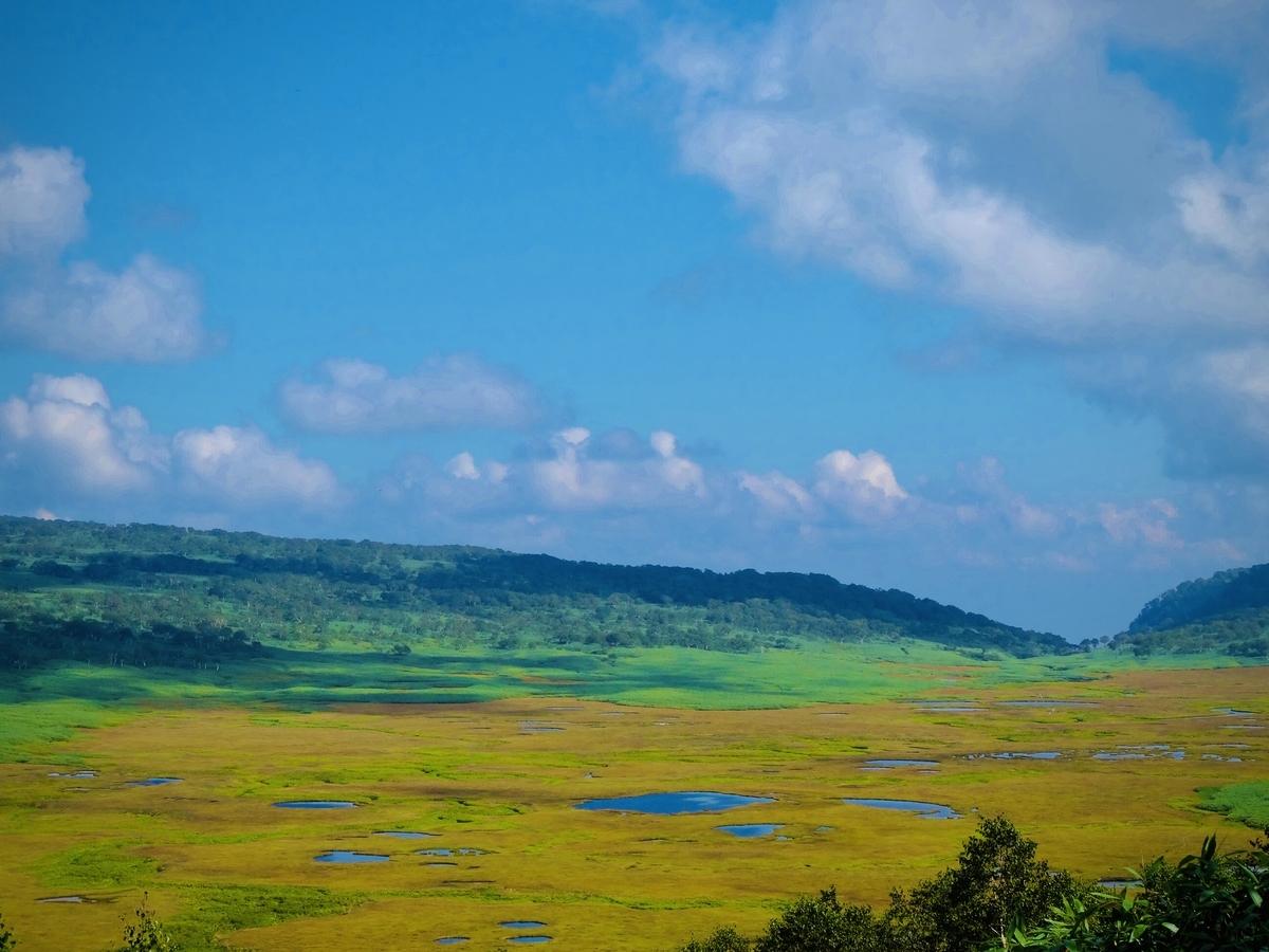 f:id:Wetland:20200416021626j:plain