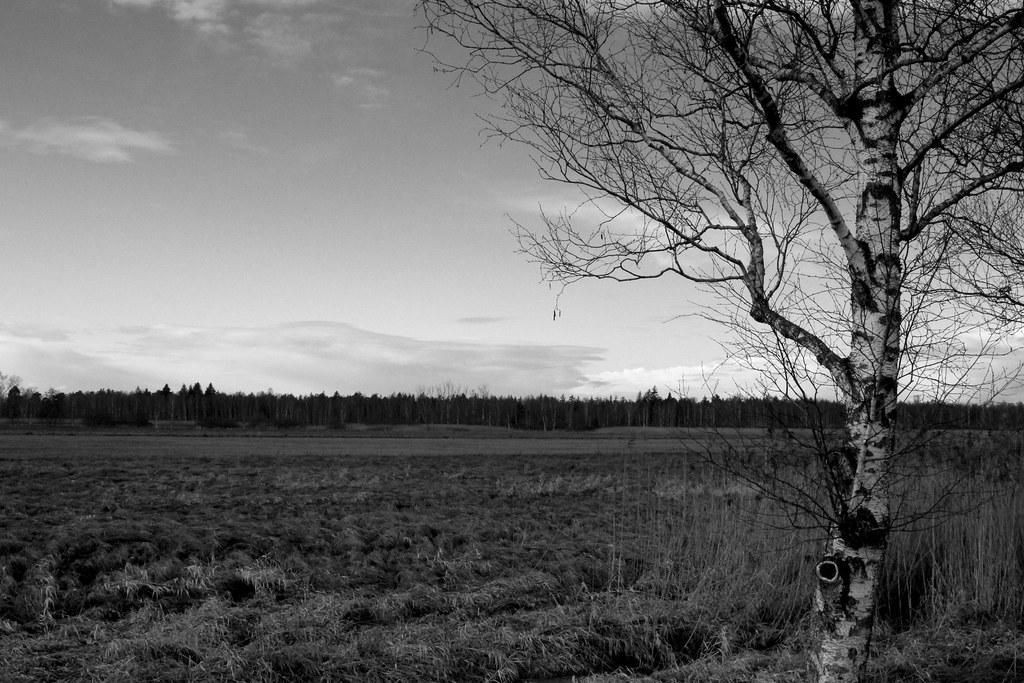 f:id:Wetland:20200802001947j:plain