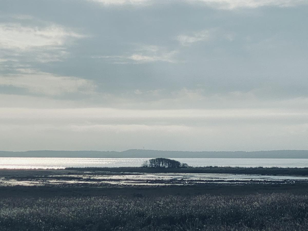 f:id:Wetland:20201108234949j:plain