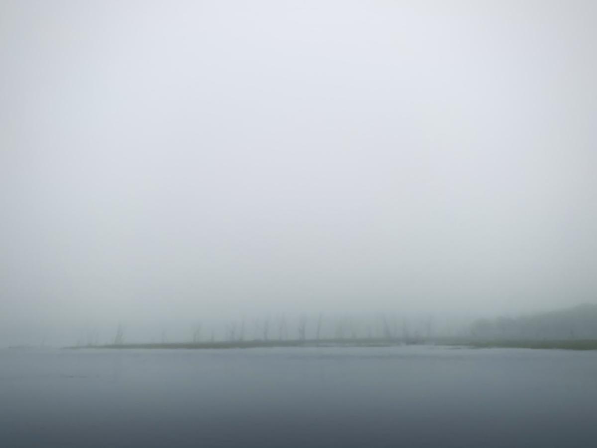 f:id:Wetland:20201108235613j:plain