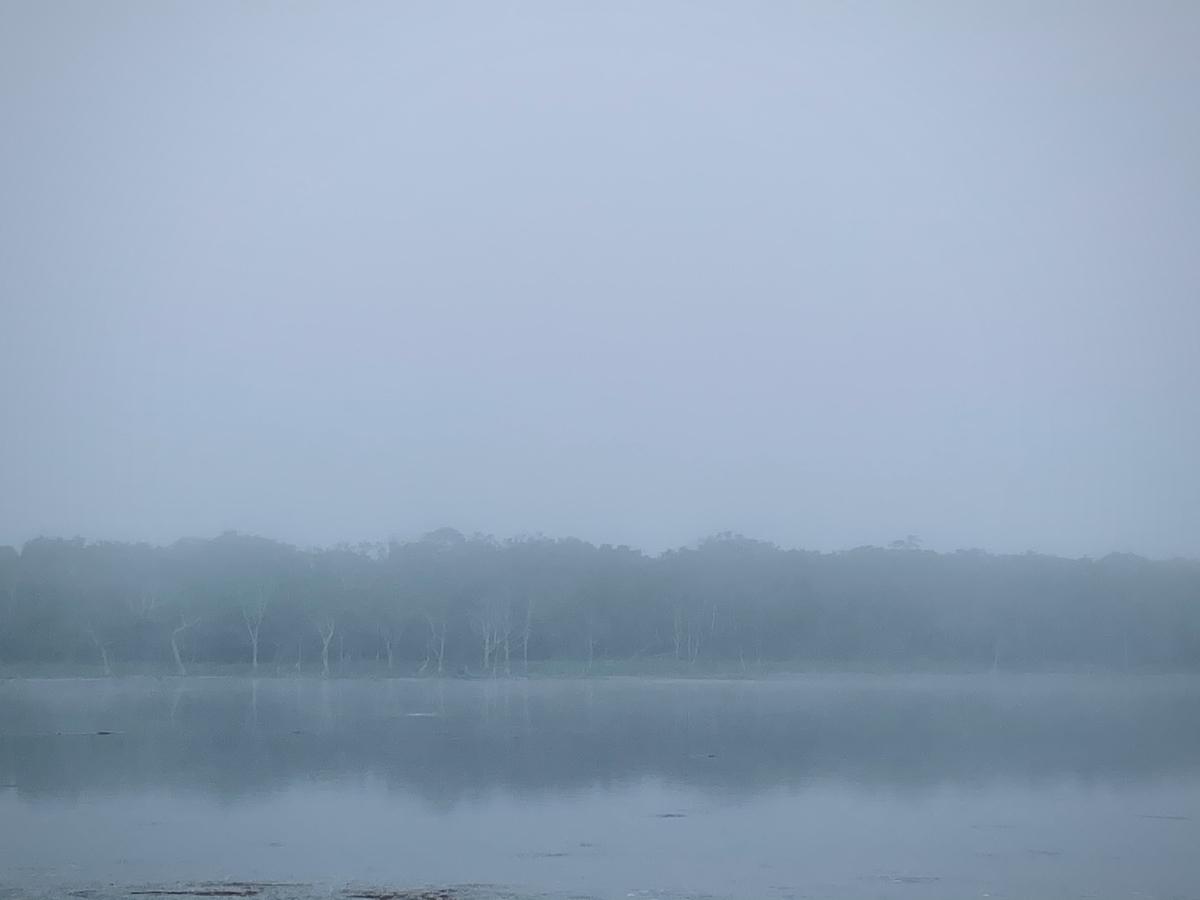 f:id:Wetland:20201108235616j:plain