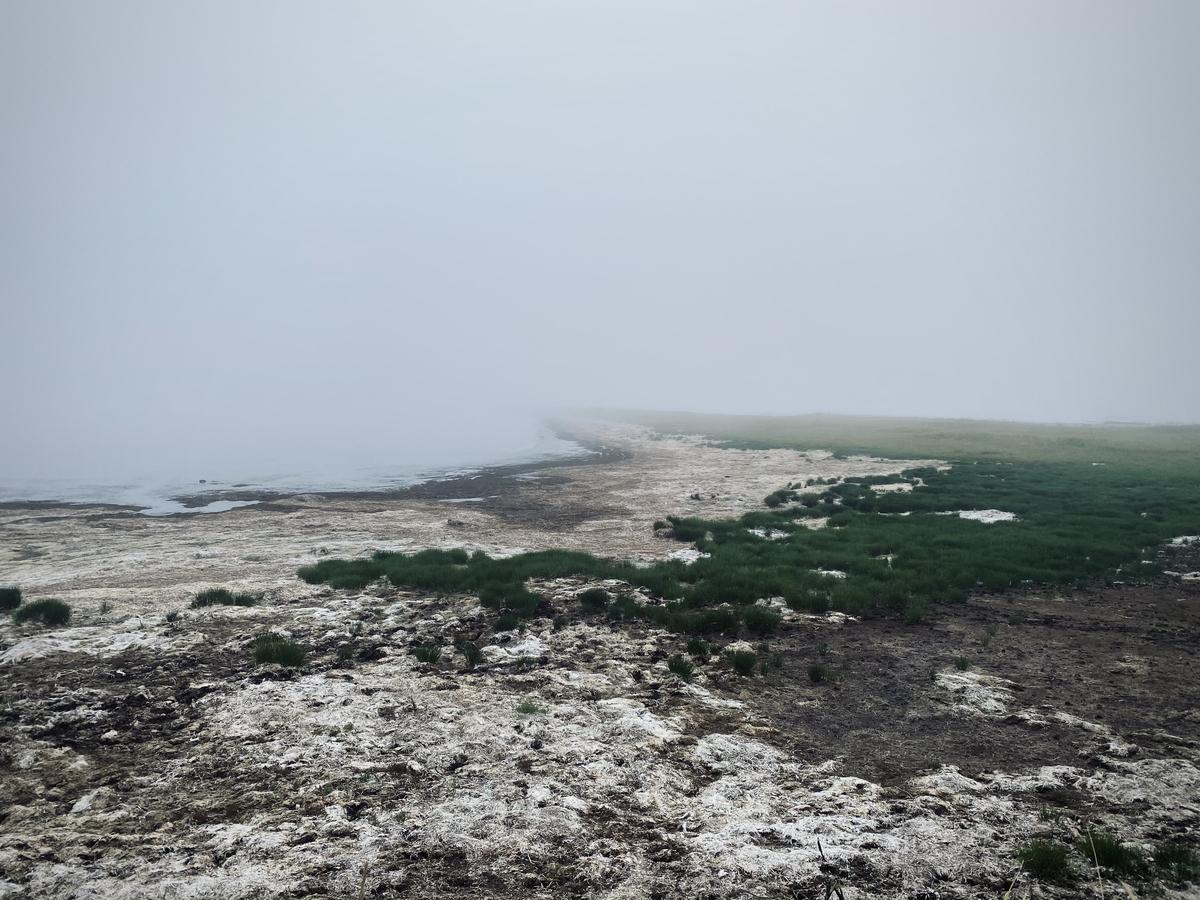 f:id:Wetland:20201109000541j:plain