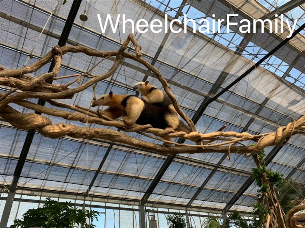 f:id:WheelchairFamily:20190918163443j:image