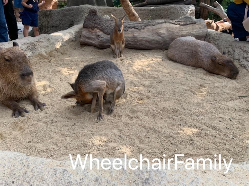 f:id:WheelchairFamily:20190918170900j:image