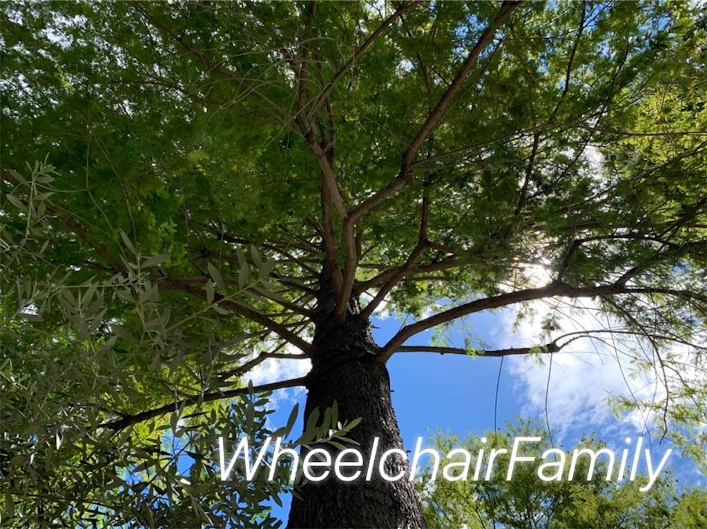 f:id:WheelchairFamily:20200901110645j:image