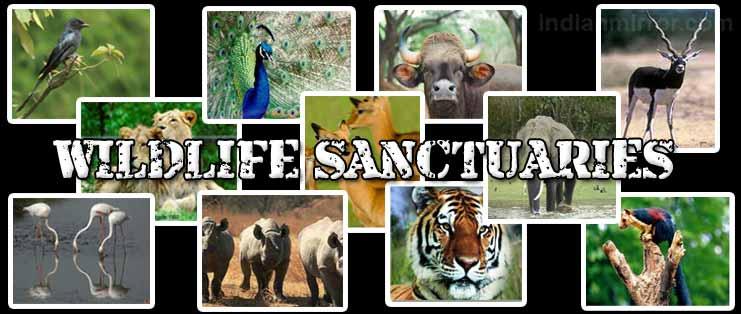 f:id:Wildlifesafari:20191003155426j:plain