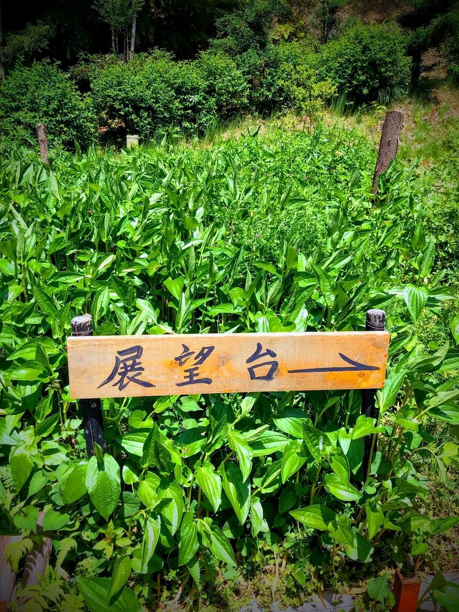 展望台もあります | 春の京都で筍を味わう「筍亭」