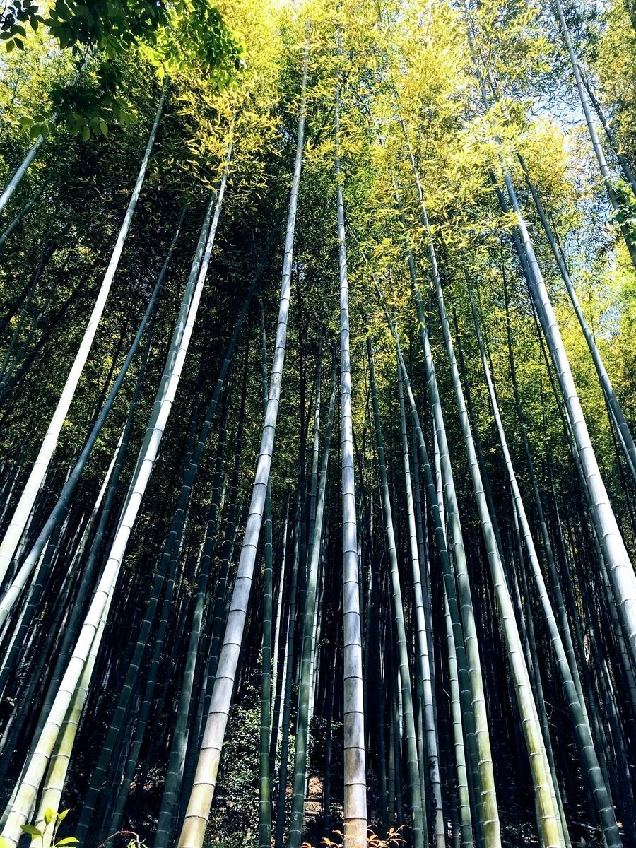 この竹は食べれません | 春の京都で筍を味わう「筍亭」