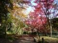 2011年11月22日、京都府立植物園