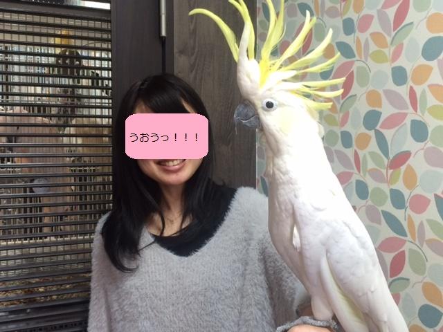 f:id:YAMAKO:20170220225720j:plain