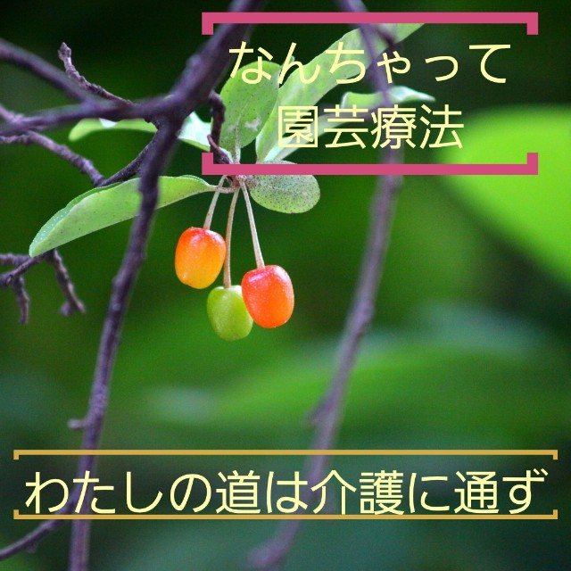 f:id:YO-PRINCE:20190310210950j:image