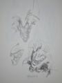 [デッサン][絵]アライグマ 頭部下顎