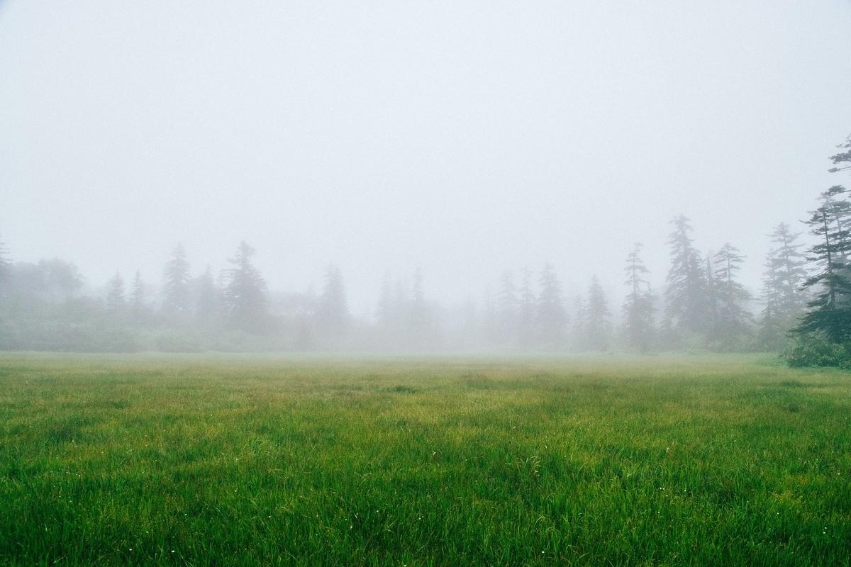 霧のかかった草原