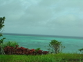 緑に染まった海