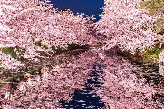 f:id:Yama-Mikasa:20180321104455j:plain