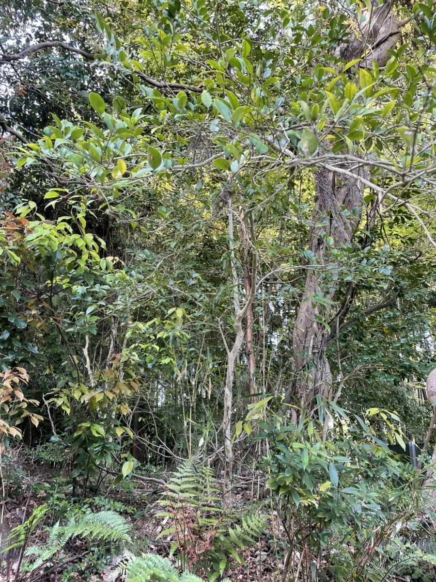 f:id:YamaTarou:20210420115900j:plain