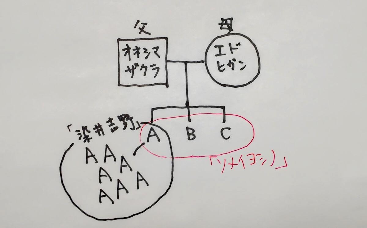 f:id:Yamadamado:20200601060853j:plain