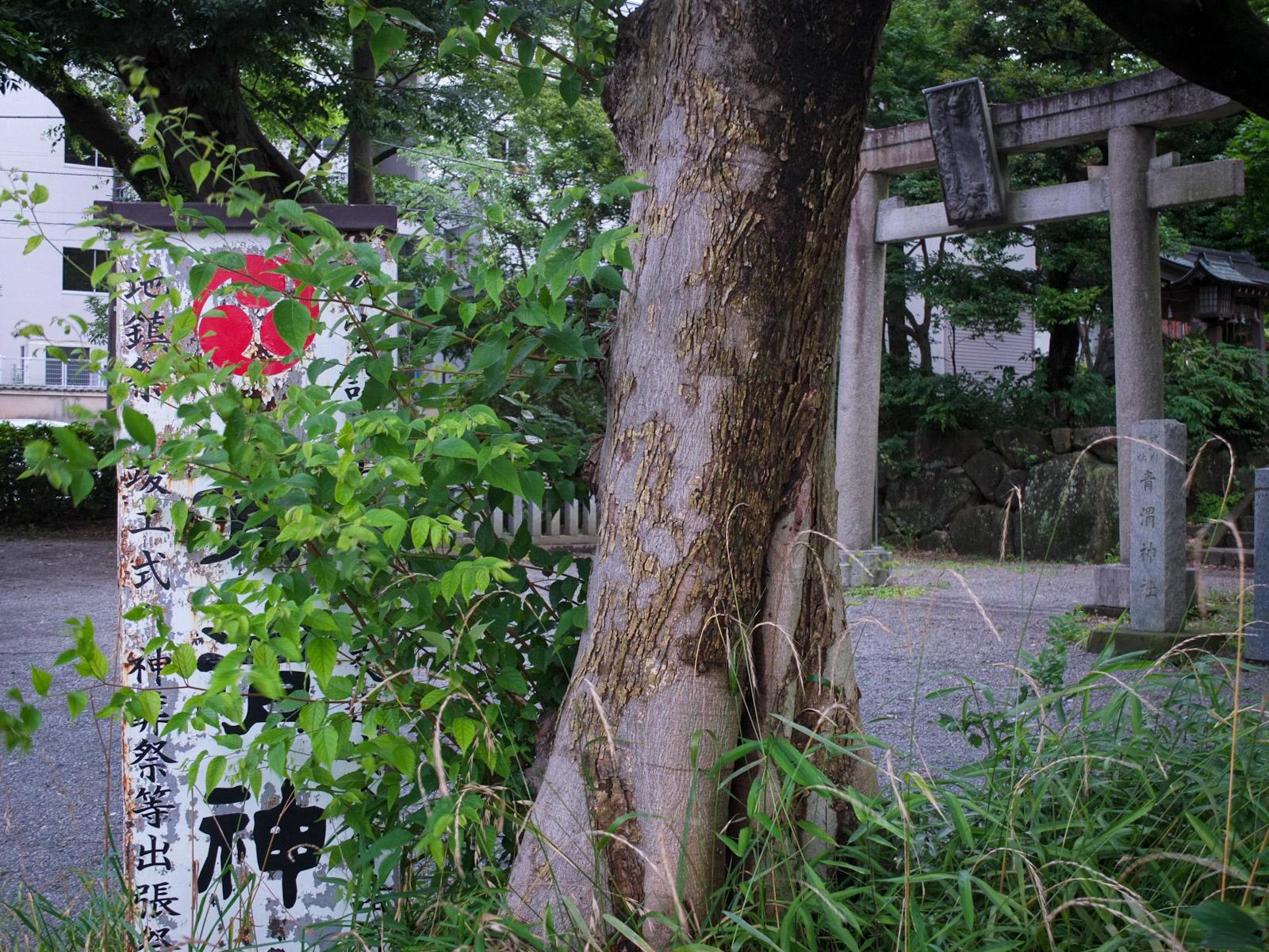 f:id:Yamadamado:20200706163552j:plain