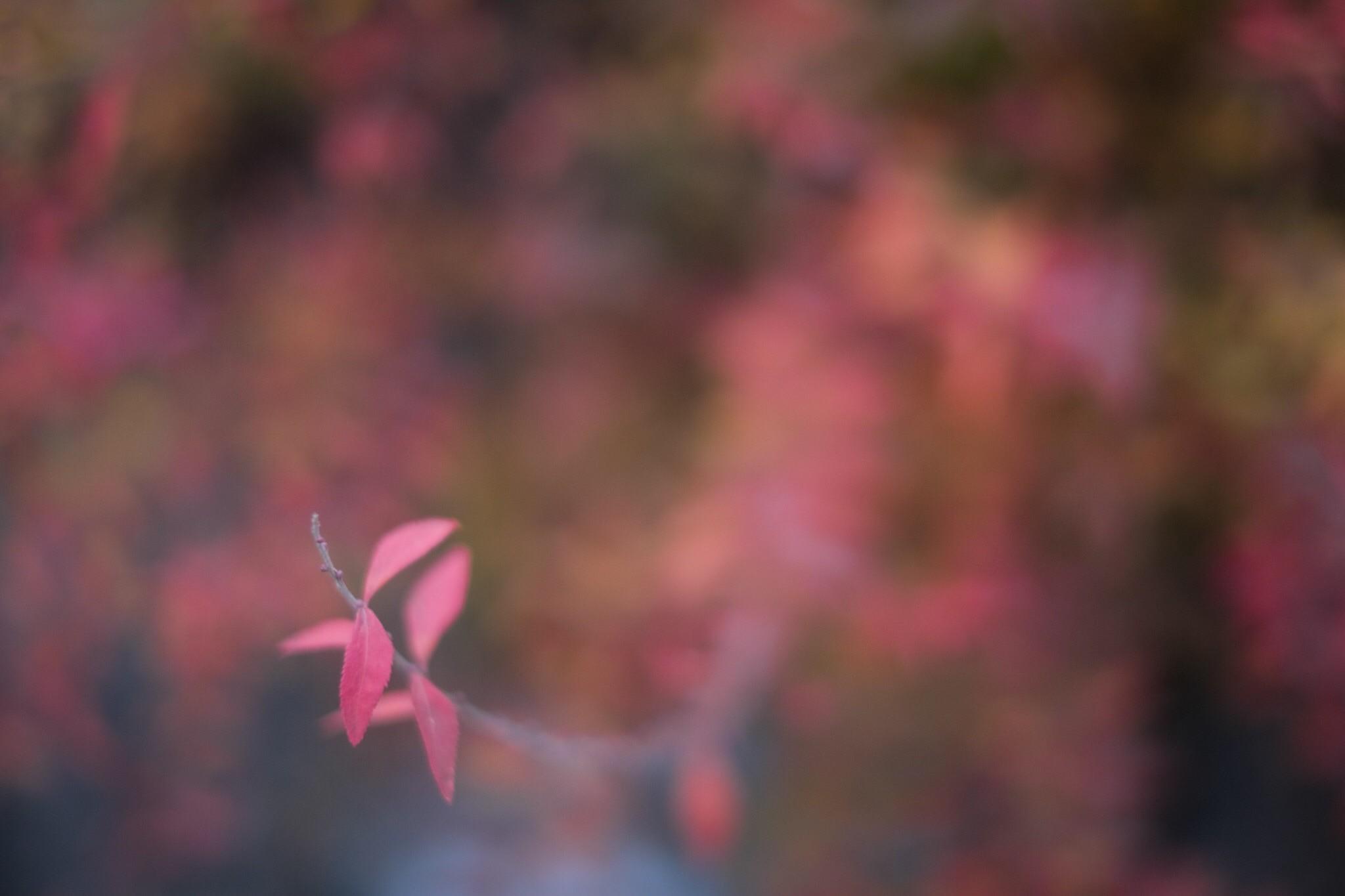 f:id:Yamadamado:20210118011900j:image