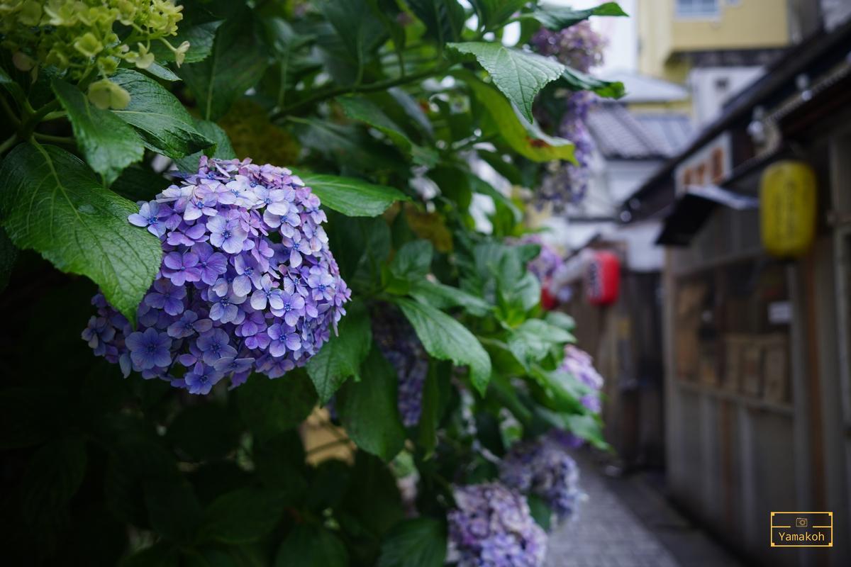 """<img src=""""Azisai.jpg"""" alt=""""自由が丘の紫陽花"""">"""
