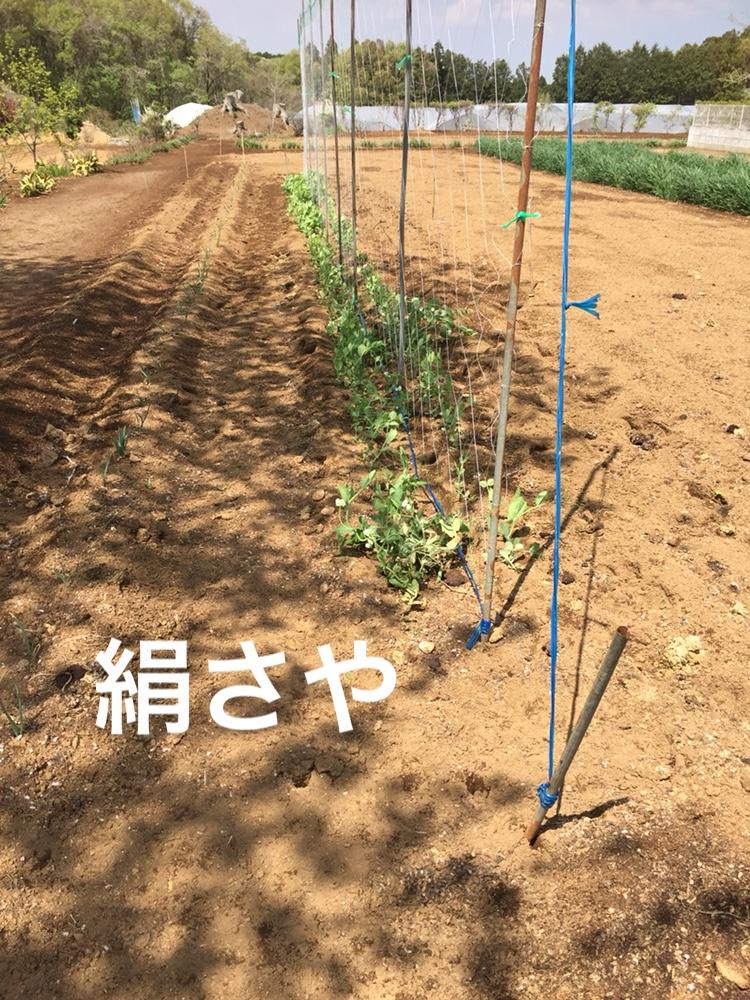f:id:Yamanao:20180429003943j:plain
