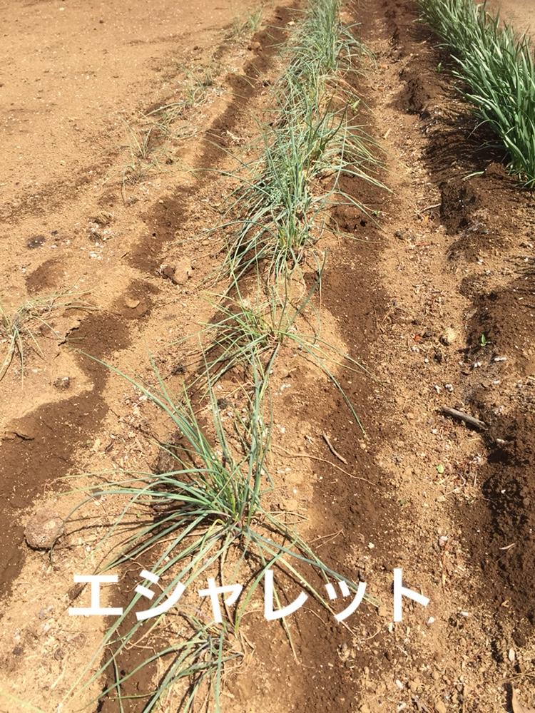f:id:Yamanao:20180429004016j:plain