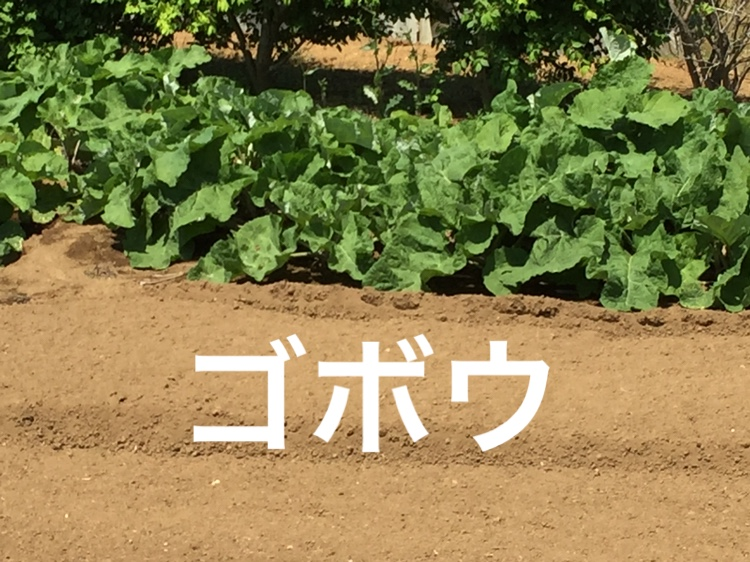f:id:Yamanao:20180514110248j:plain