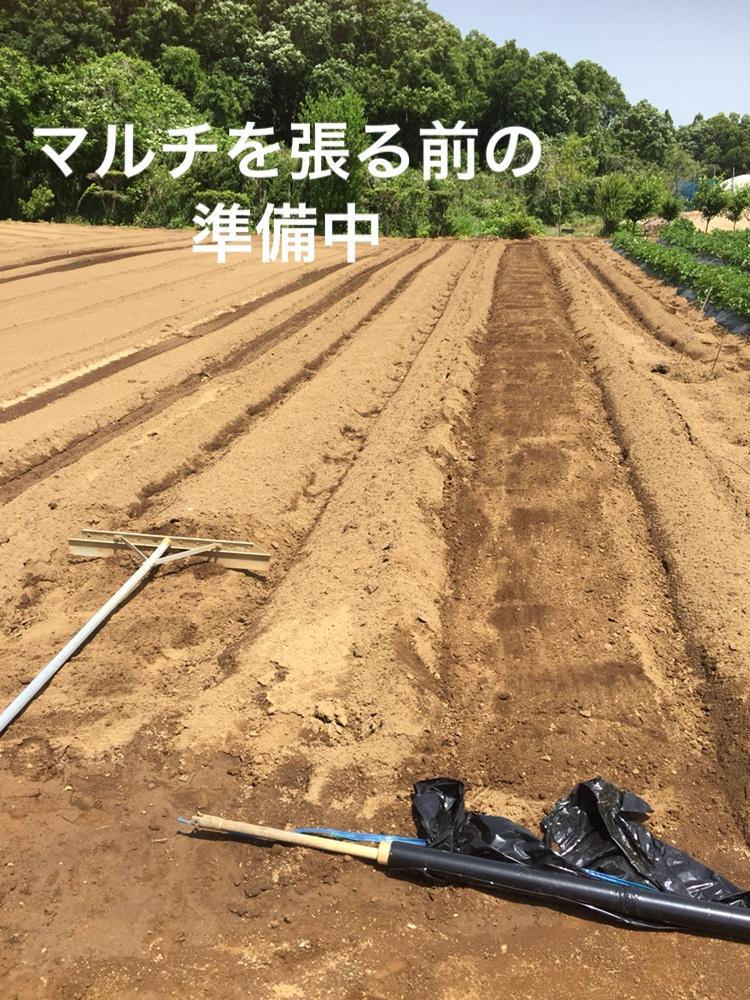 f:id:Yamanao:20180517231909j:plain
