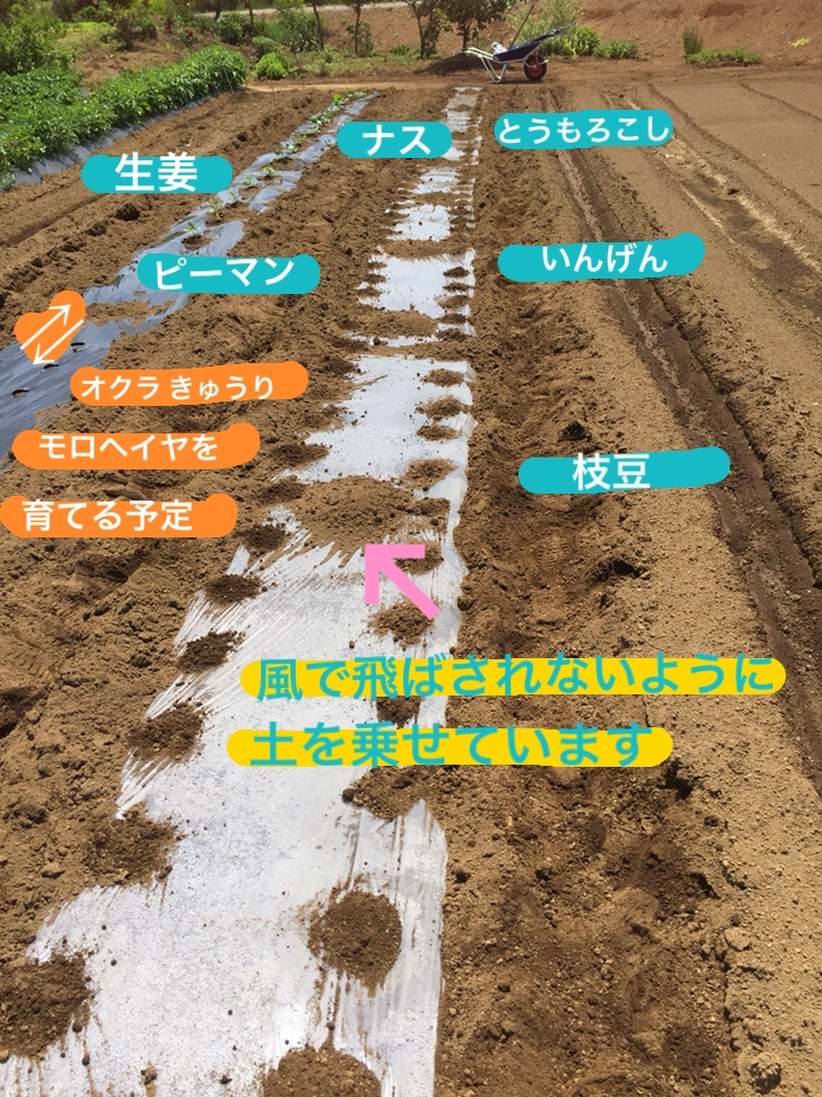 f:id:Yamanao:20180517231932j:plain