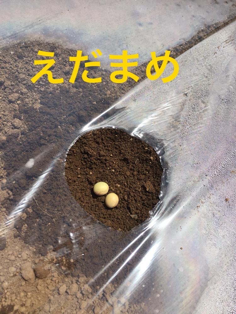 f:id:Yamanao:20180517231954j:plain