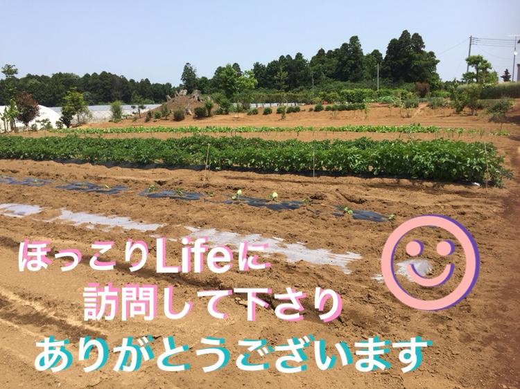 f:id:Yamanao:20180517232020j:plain