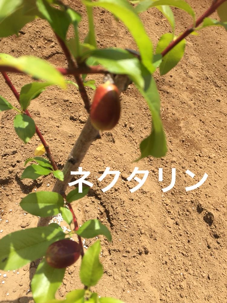 f:id:Yamanao:20180517232048j:plain