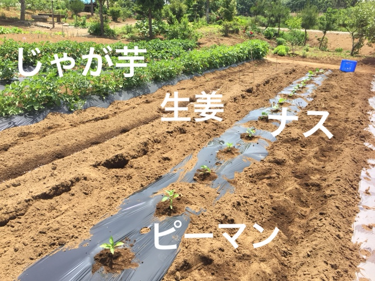 f:id:Yamanao:20180517235652j:plain