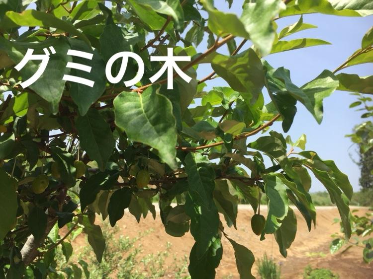 f:id:Yamanao:20180518131700j:plain