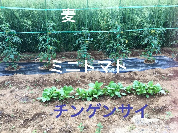 f:id:Yamanao:20180519190337j:plain