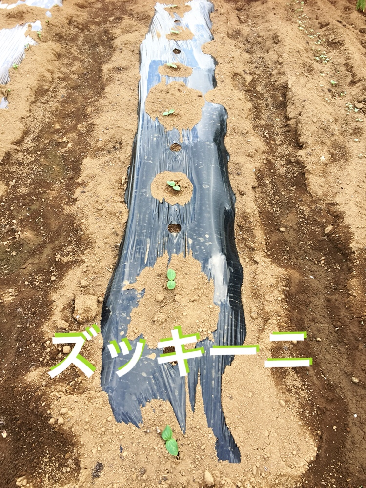 f:id:Yamanao:20180519190424j:plain