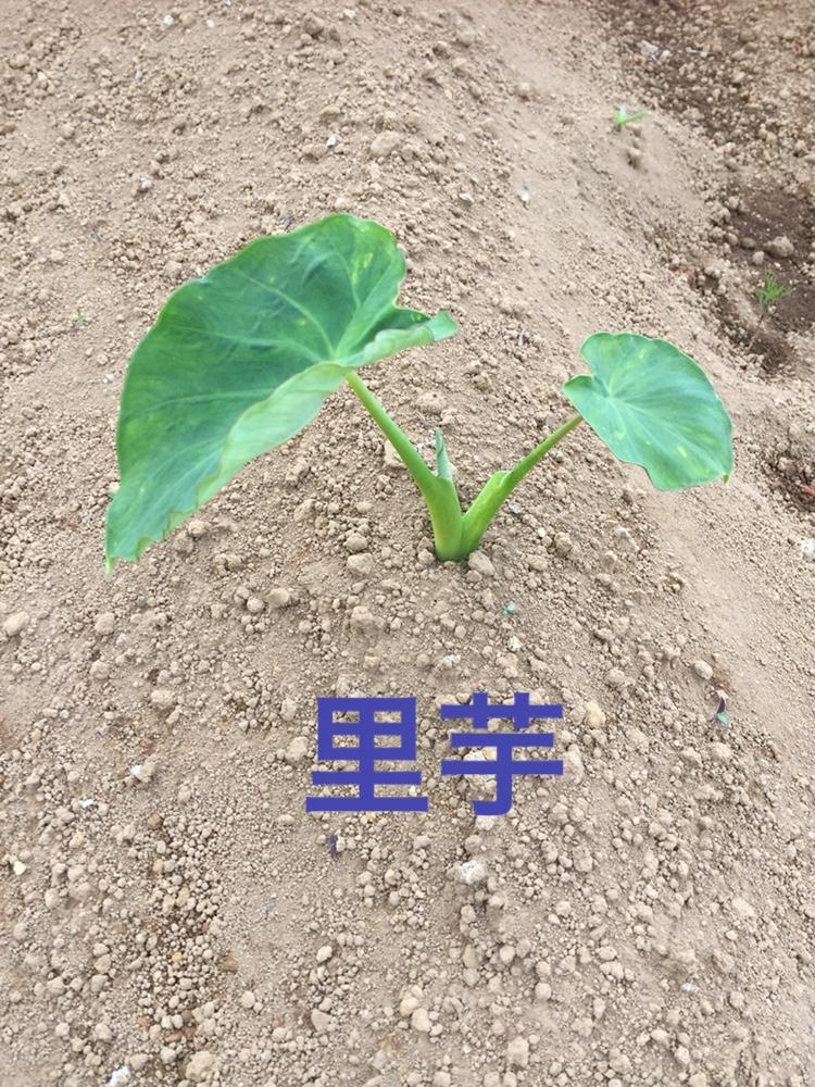 f:id:Yamanao:20180519190455j:plain