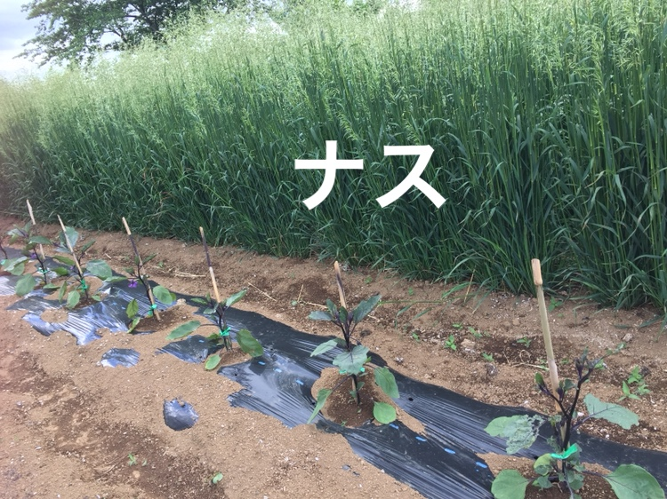 f:id:Yamanao:20180519190519j:plain