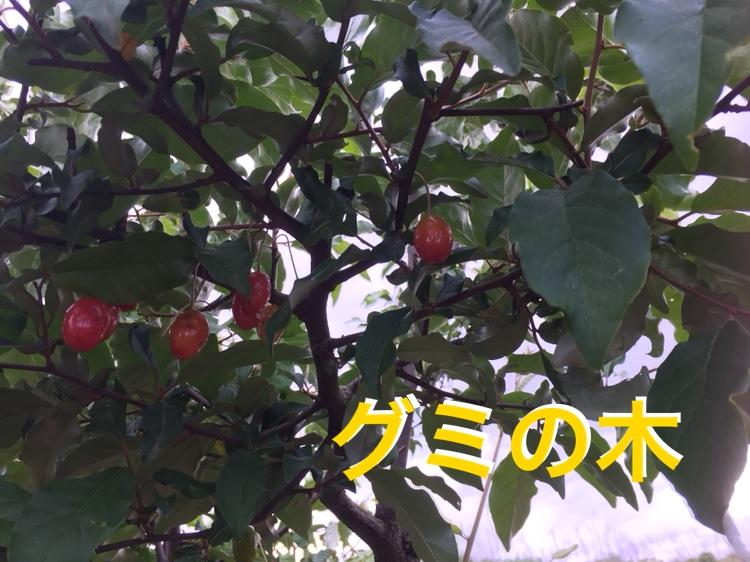 f:id:Yamanao:20180519190600j:plain
