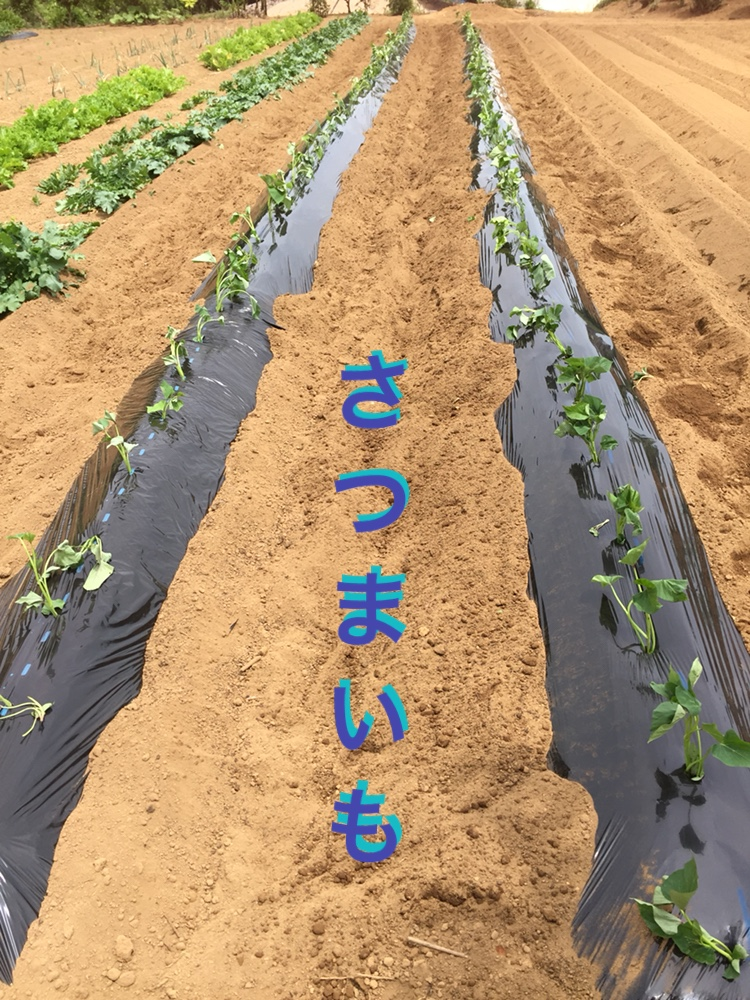 f:id:Yamanao:20180525124449j:plain