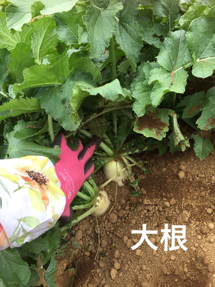 f:id:Yamanao:20180525124537j:plain