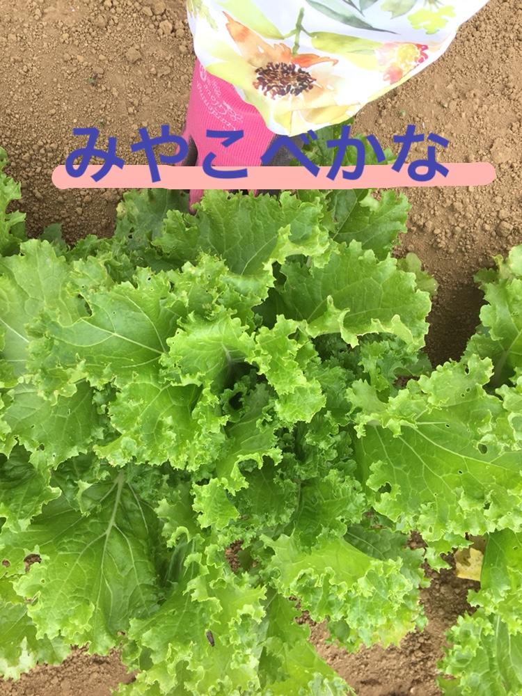 f:id:Yamanao:20180525124558j:plain