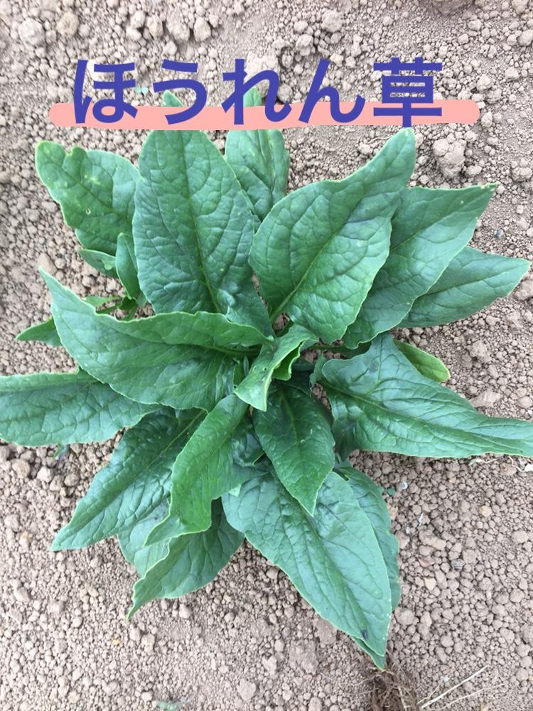 f:id:Yamanao:20180525124623j:plain