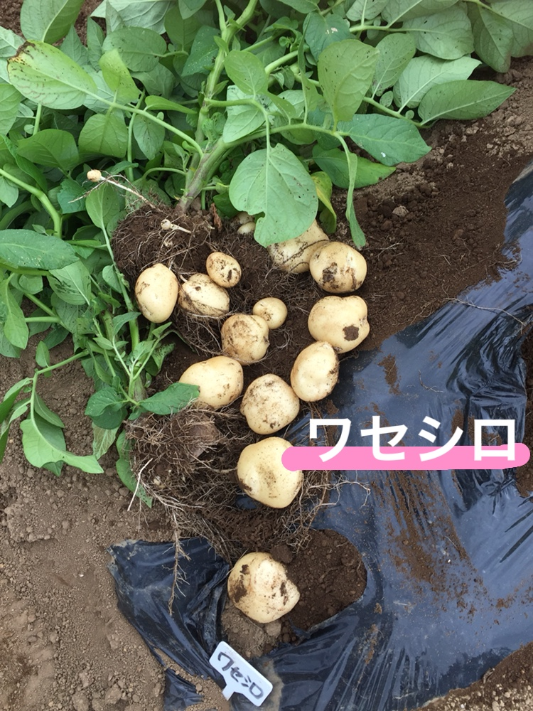 f:id:Yamanao:20180525124635j:plain
