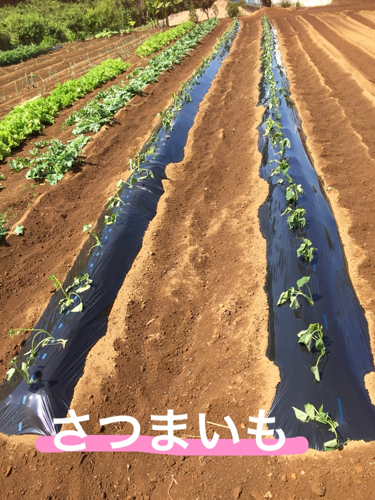 f:id:Yamanao:20180525124644j:plain