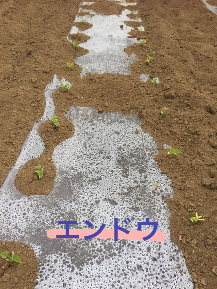f:id:Yamanao:20180525130515j:plain