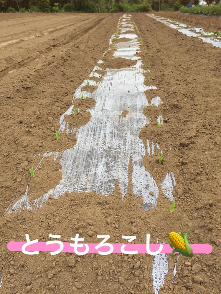 f:id:Yamanao:20180525130603j:plain