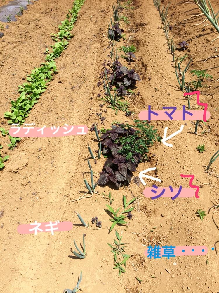 f:id:Yamanao:20180530121931j:plain