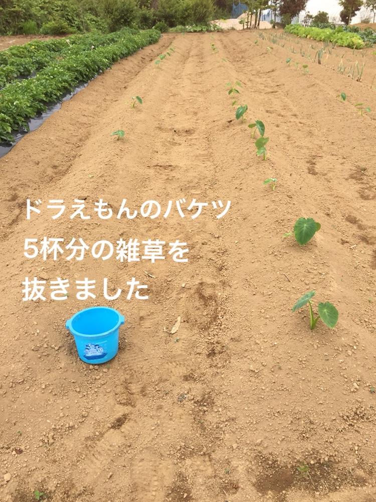 f:id:Yamanao:20180530121942j:plain